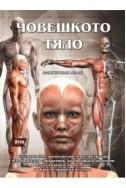 Човешкото тяло: Илюстрован атлас